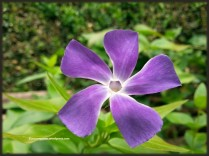floralfriday_27jan17_3