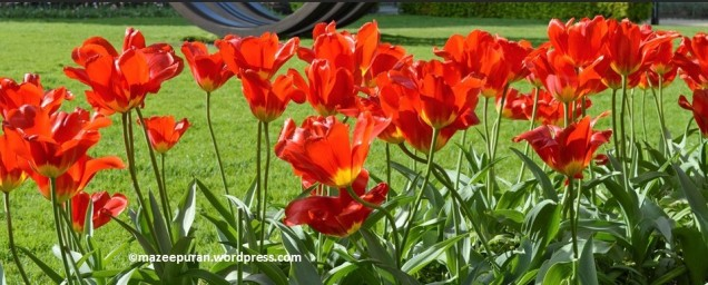 floralfriday_16mars18_3