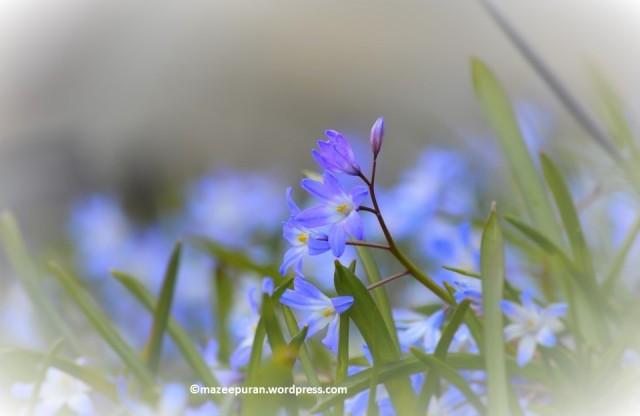 floralfriday_27april18