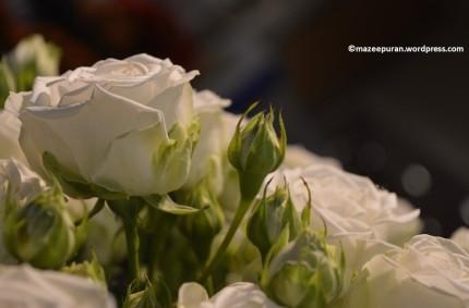floralfriday_18mai18_2